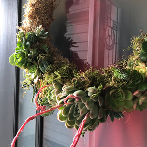 Living Succulent Wreath Workshop NEW DATES COMING SOON