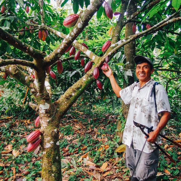 Ceremonial-Cacao-Farming-1