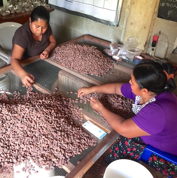 Ceremonial-Grade-Cacao-Sorting-1