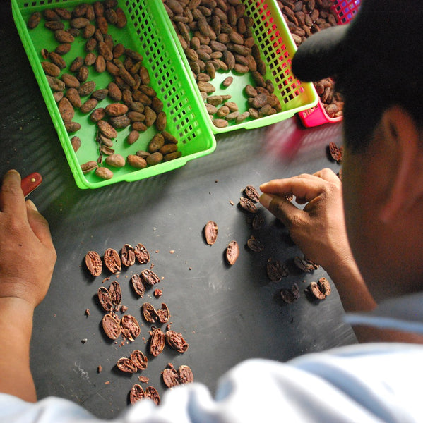 Ceremonial-Grade-Cacao-Sorting-2