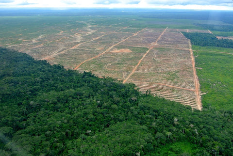 Tropical Rainforest Deforestation for Palm Oil