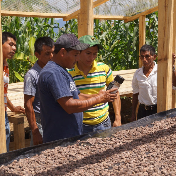 Small-Holder-Farm-Community-Cacao-Drying-1