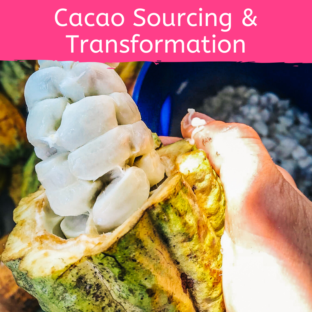 Course 4: Cacao Sourcing and Transformation for Cacao Ceremony and Holistic Health by Firefly Chocolate