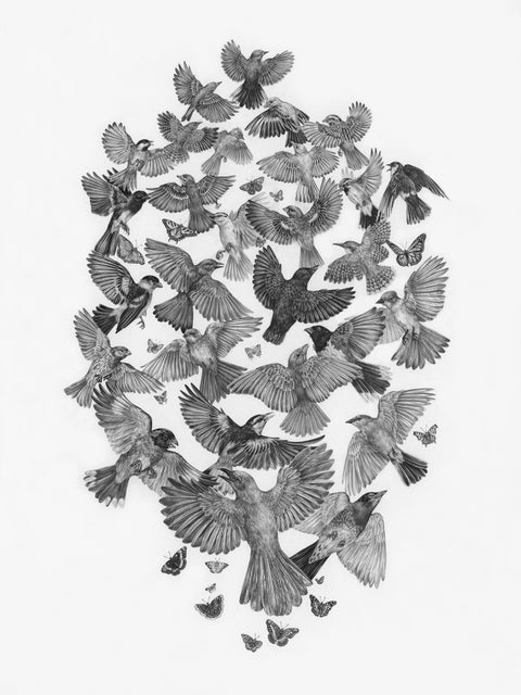 Zoe Keller - Common Songbirds & Butterflies of Zion National Park