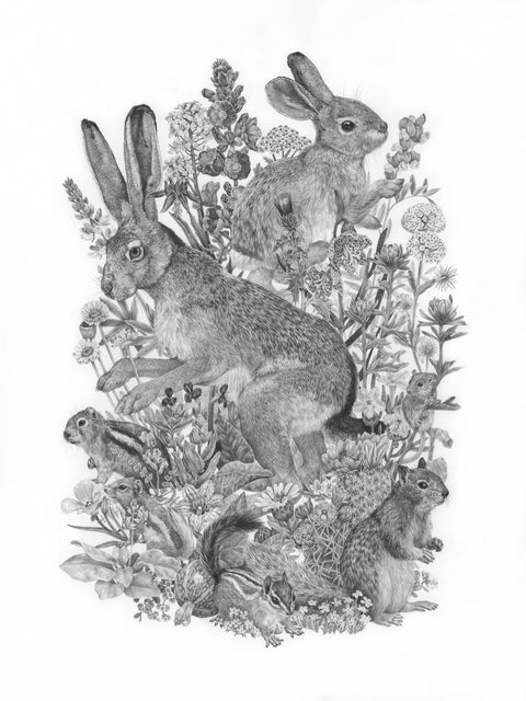 Zoe Keller - Common Small Mammals & Wildflowers of Zion National Park