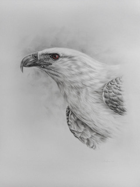 "Alex Louisa - ""White-bellied Sea Eagle"""