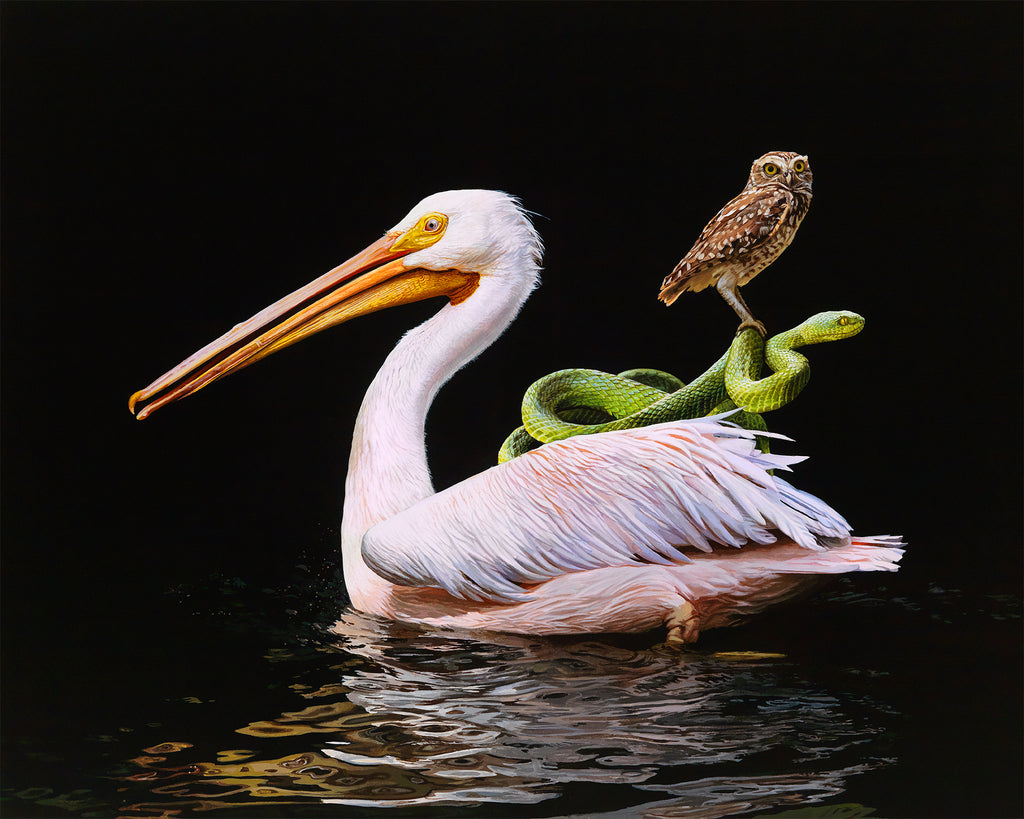 Lisa Ericson - Distant Shore