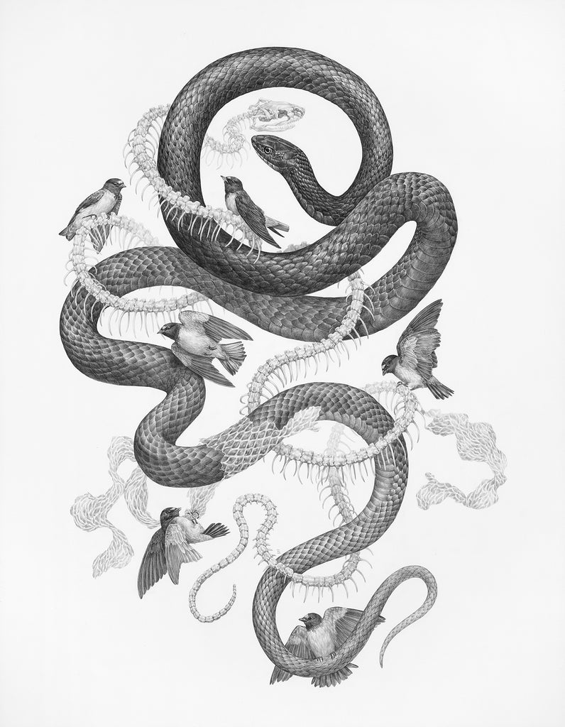 Zoe Keller - Eastern Coachwhip and Cliff Swallow