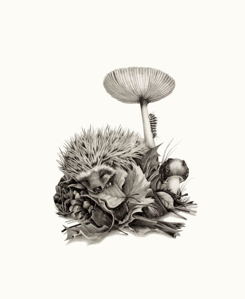 Katy Harrald - 'Hedgehog in Autumn'