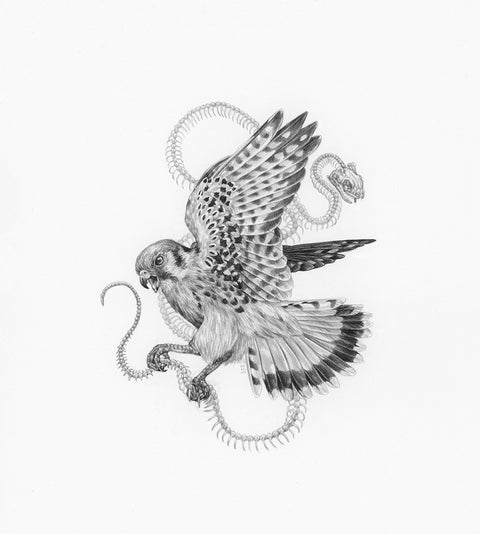 "Zoe Keller - ""Kestrel and Garter Snake Skeleton"""