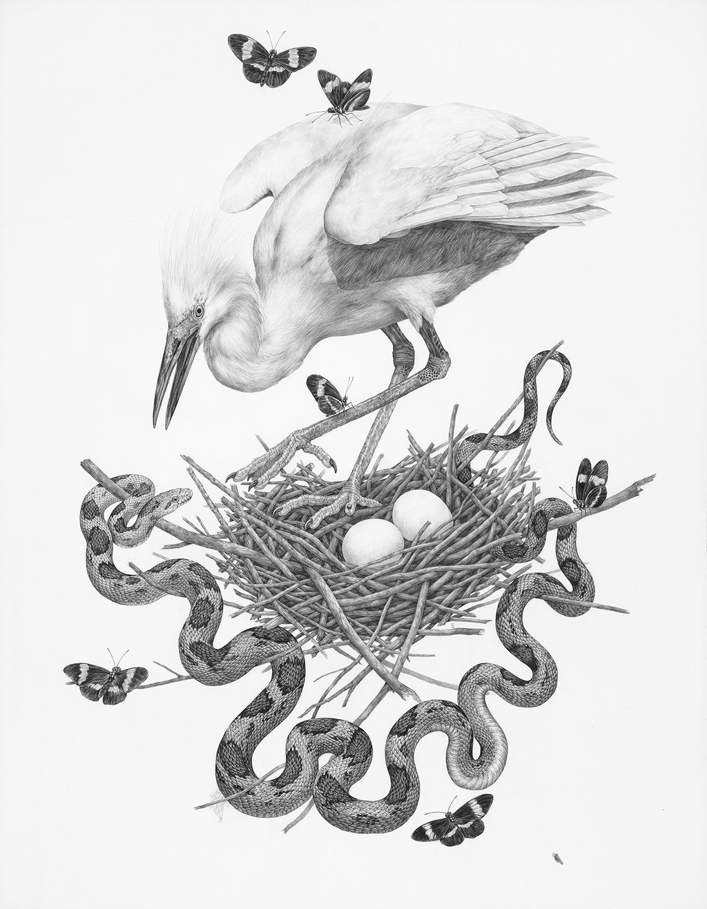 Zoe Keller - Snowy Egret, Gray Rat Snake and Red Postman Butterfly