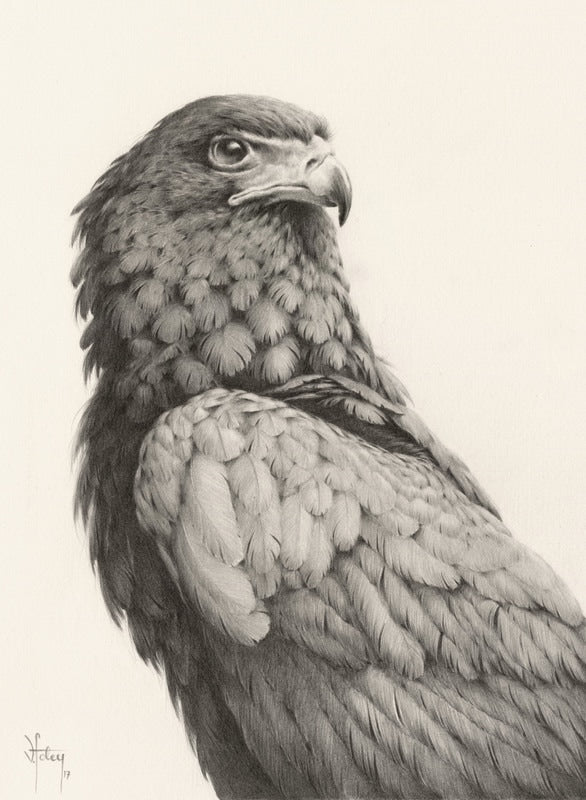 Vanessa Foley - Bateleur Eagle