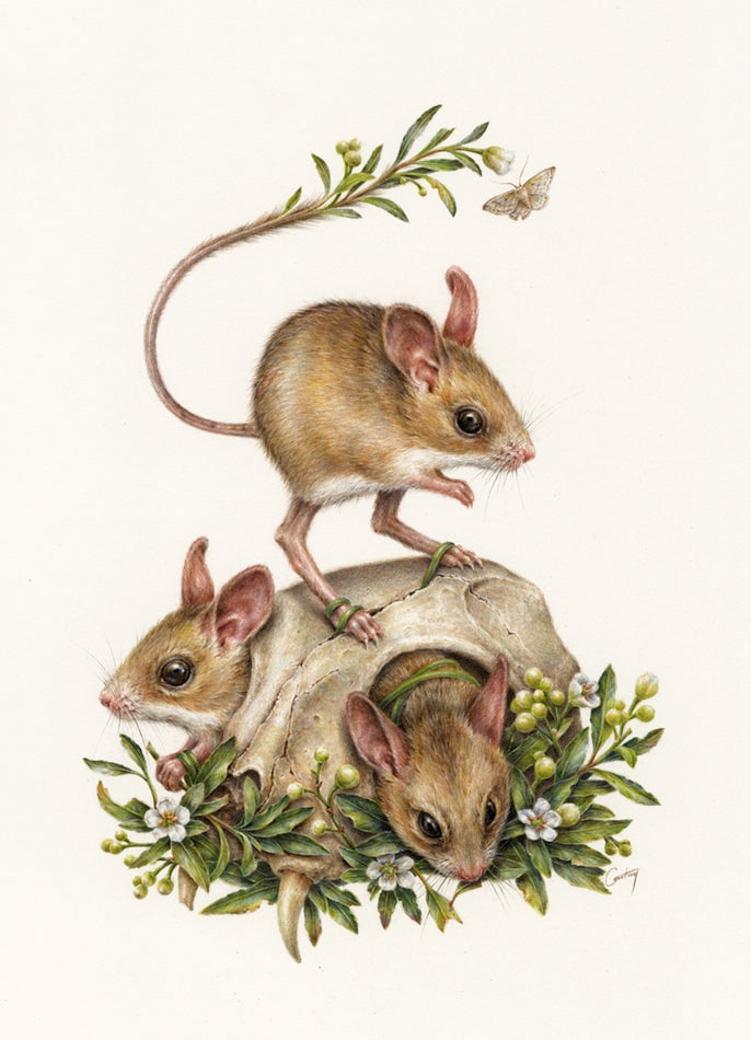 Courtney Brims - Dusky Hopping Mice