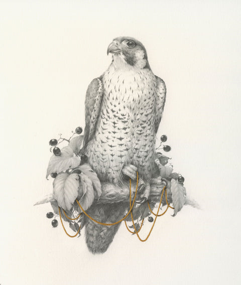 Limited Edition Print: Vanessa Foley - Sirius