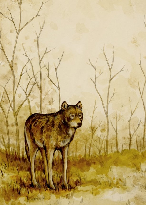 Keith Carter - Red Wolf