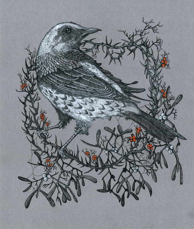 Sin Eater - The Lonely Fieldfare