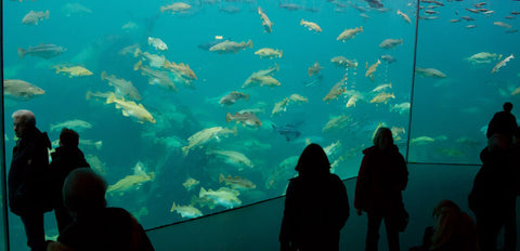 Acuario Atlantic Sea Park en Noruega