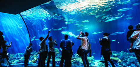 Acuario Shedd Aquarium en Chicago, Estados Unidos