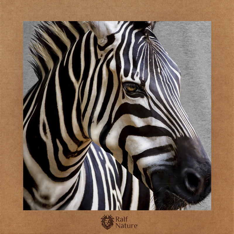 Zebra T-Shirt Women