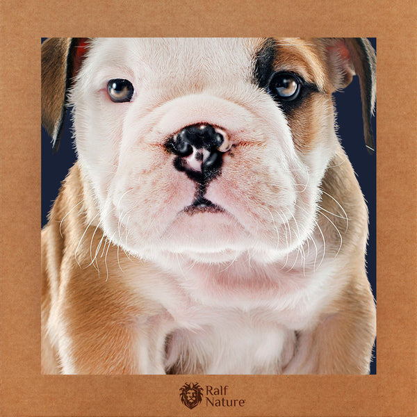 English Bulldog Cub T-Shirt Kids