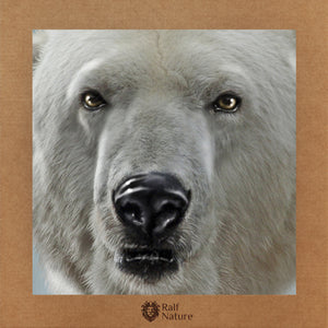 Polar Bear Head T-Shirt