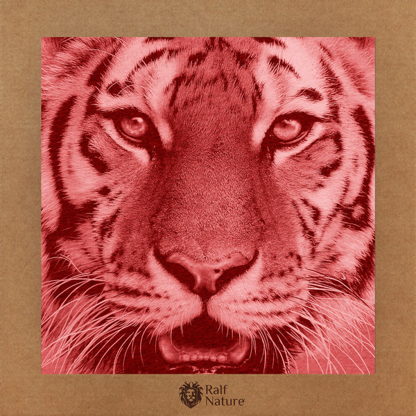 Tiger Face XR T-Shirt