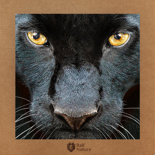 Black Panther Face XR T-Shirt