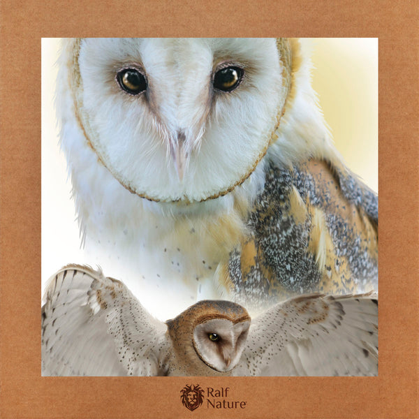 Barn Owl T-Shirt Women