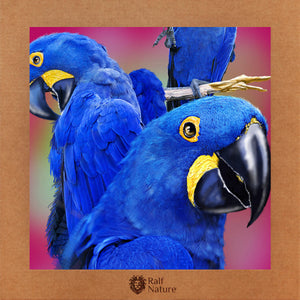 Blue Macaws T-Shirt Kids