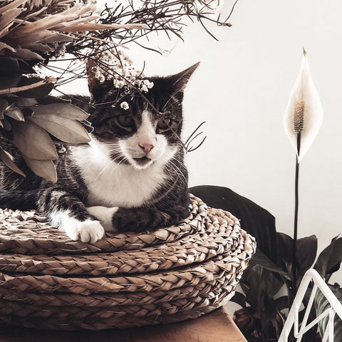 Grey and white tabby cat sitting in a straw basket beside dried flowers