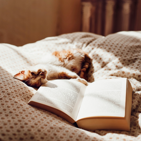 ORA Bedtime Rituals Blog by Kate Shanks_Reading with Cat