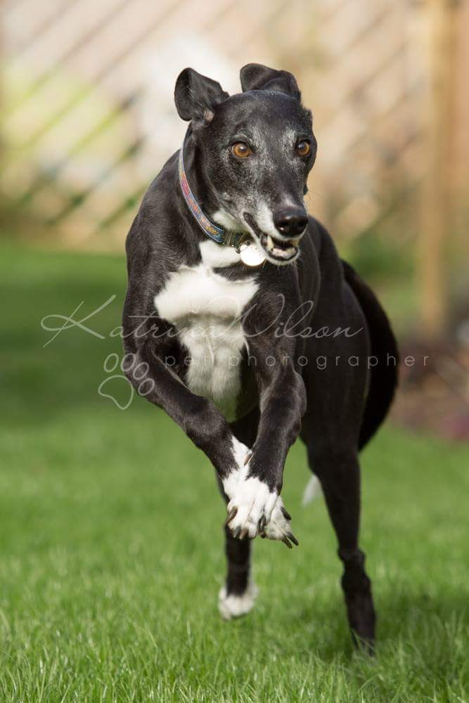What exactly is a Lurcher?