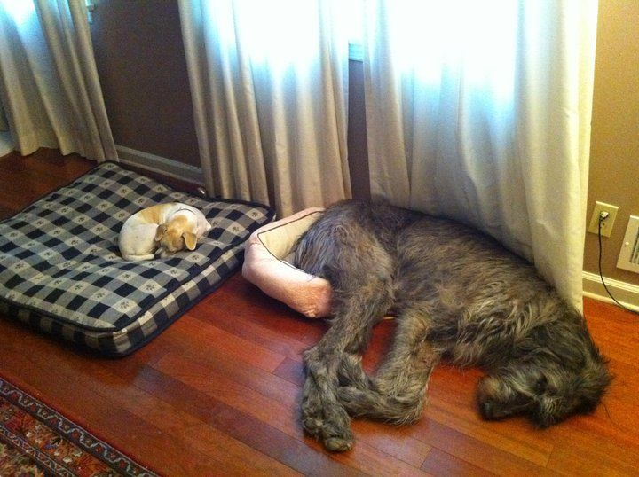 Things to consider when choosing the right dog bed...