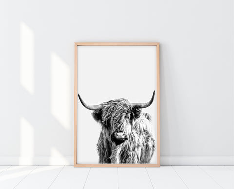 Highland Cow Print | Blue Steer