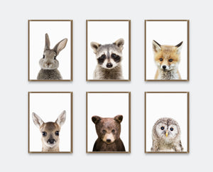 Woodland Nursery Decor | PeekABoo Woodland Animals Collection | Ollie + Hank