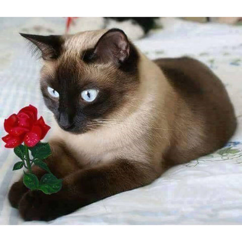Image of Diamond Painting - Siamese Cat and Red Flower - Floating Styles - Diamond Embroidery - Paint With Diamond