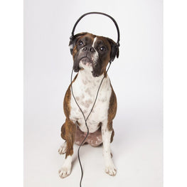 Diamond Painting - Boxer Dog With Headphones - Floating Styles - Diamond Embroidery - Paint With Diamond