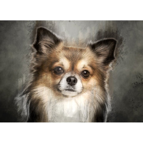 Immagine di Diamond Painting - Chihuahua Dog