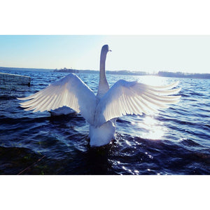 Diamond Painting - Swan to Fly