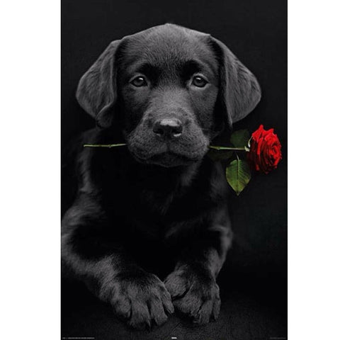 Bild der Diamantmalerei - Labrador Dog & Rose - Floating Styles - Diamantstickerei - Malen mit Diamant