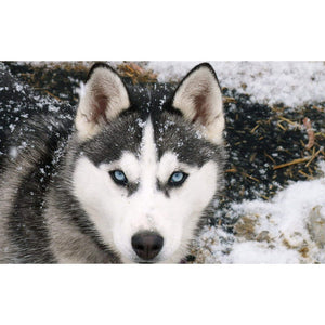 Diamantmalerei - Husky im Schnee - Floating Styles - Diamantstickerei - Malen mit Diamant