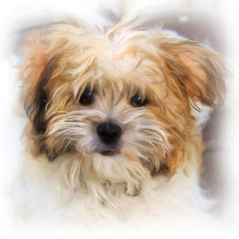 Image of Diamond Painting - Calling Me - Yorkshire Terrier - Floating Styles - Diamond Embroidery - Paint With Diamond