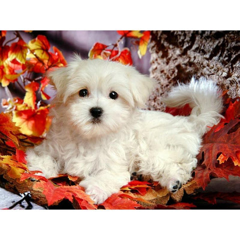 Immagine di Diamond Painting - Cute Bichon Frise - Stili fluttuanti - Ricamo a diamante - Dipingi con diamante