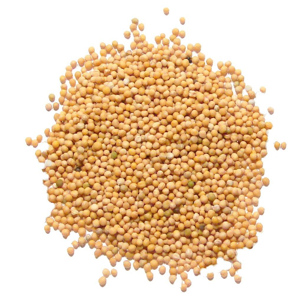 Whole Yellow Mustard Seed - 100 Oz.