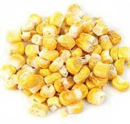 Whole Roasted Freeze Dried Corn Kernels - 10 Oz.