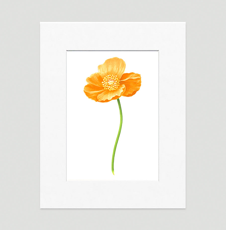 Poppy Gold Large Floral Art Print Di Lewis Living Room Wall Decor