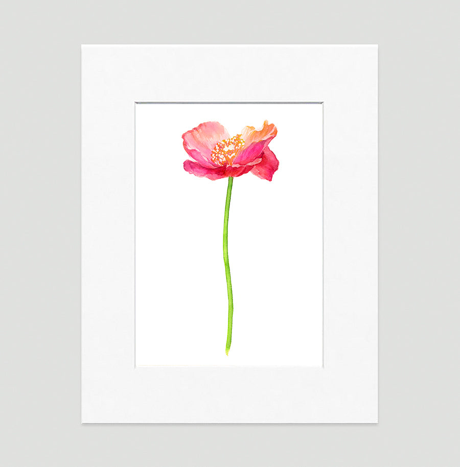 Poppy Pink Floral Art Print Di Lewis Living Room Wall Decor