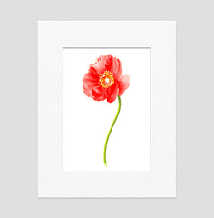 Poppy Red Floral Art Print Di Lewis Living Room Wall Decor