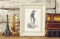 The Proud Cock Art Print - Vintage Illustrations Wall Art Collection