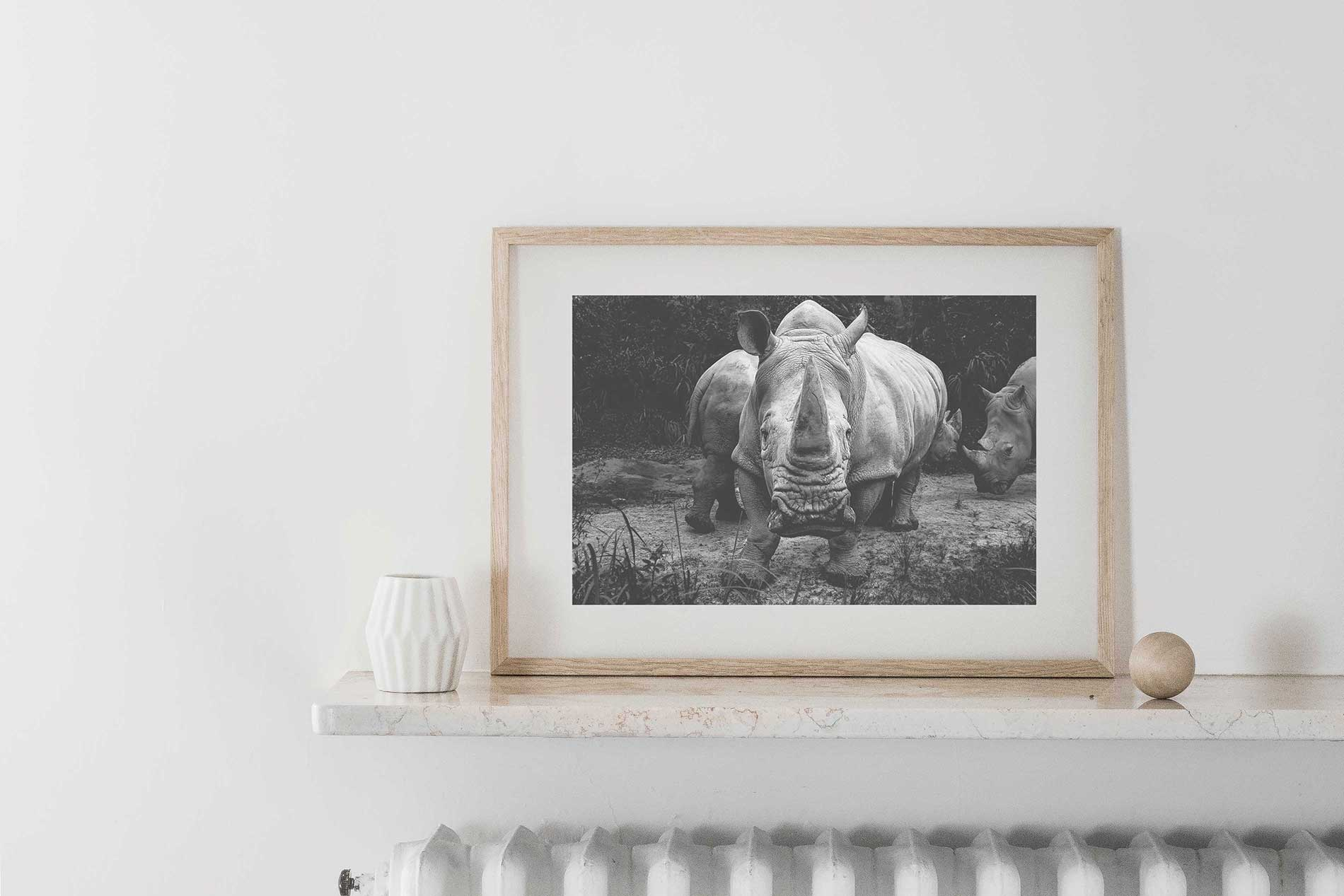 Rhinoceros in Africa